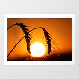 Wheat Sunset Silhouettes Art Print