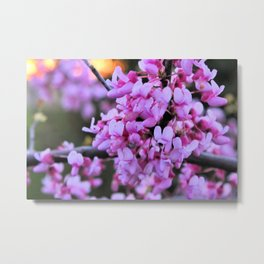 Purple of Spring Metal Print