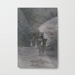 Female Lion with cubs #1 Metal Print