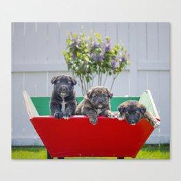 Three Pup-migos Canvas Print