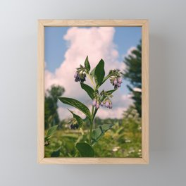 Healing Comfrey Plant with Flowers Framed Mini Art Print
