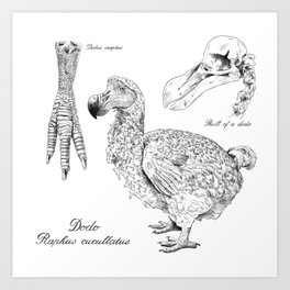 The last Dodo - scientific illustration Art Print