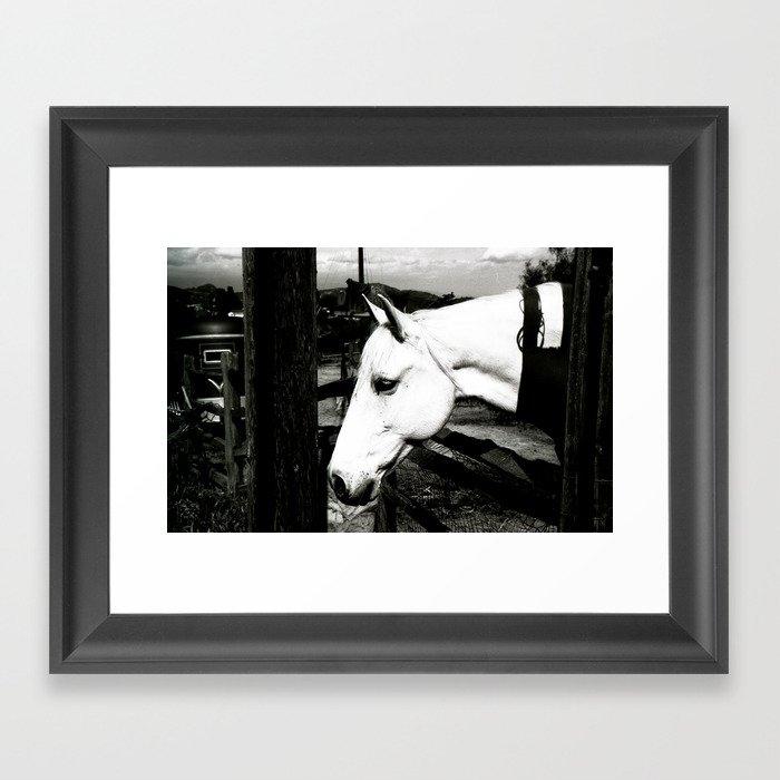 white horse Framed Art Print