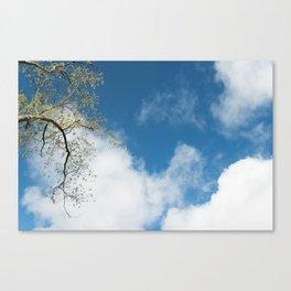 Branques al cel Canvas Print