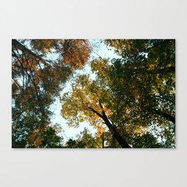 Fall Treetops Canvas Print