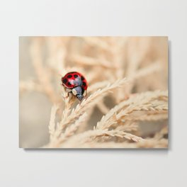 The Wandering Ladybird Metal Print