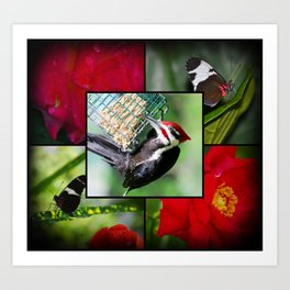 Butterflys and woodpecker Art Print