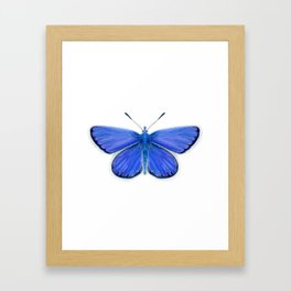 Adonis Blue Butterfly Watercolor Artwork Insect Painting Framed Art Print