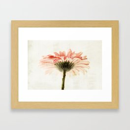 Gerbera Turnaround Framed Art Print