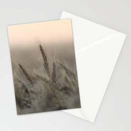 Morning Dew on Wheat Field Stationery Cards