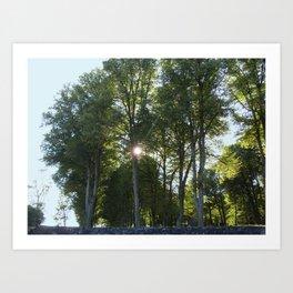 Sun behind the trees  Art Print