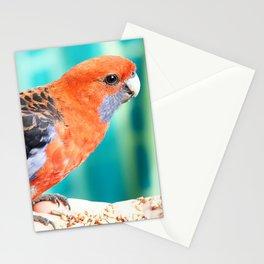 Crimson Rosella Stationery Cards