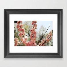 Sweet William Framed Art Print