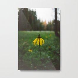 Yosemite National Park XIV Metal Print
