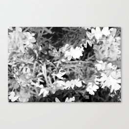 """Flowers really do intoxicate me."" – Vita Sackville-West Canvas Print"