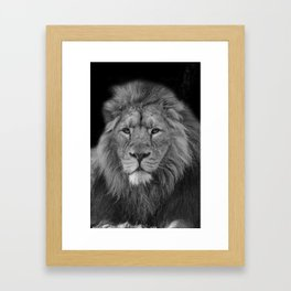 Asiatic Lion Framed Art Print