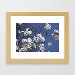 Star filled sky (Star Magnolia flowers!)      Edit Framed Art Print
