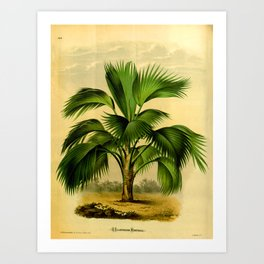 Vintage Botanical illustration, 1875 (Palm) Art Print