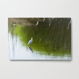 White Egret standing over reflection in green water Metal Print