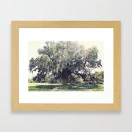 Great Oak  Framed Art Print