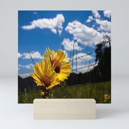 A Rocky Mountain Sunflower Mini Art Print