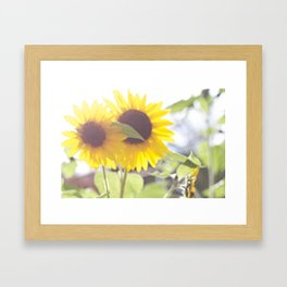 Sunflowers From My Mother-in-law's Garden Framed Art Print