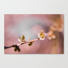Buds on a Tree with Bokeh Canvas Print