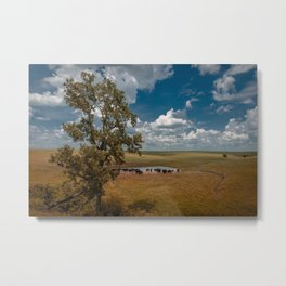 Cattle at a Watering Hole in the Pasture Metal Print
