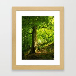 Beech Tree Framed Art Print