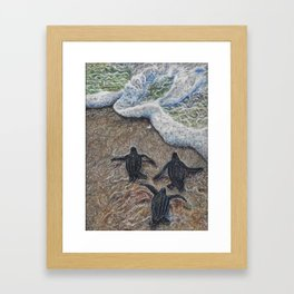 Loggerhead Sea Turtles Framed Art Print