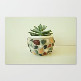 My Little Succulent 2  Canvas Print