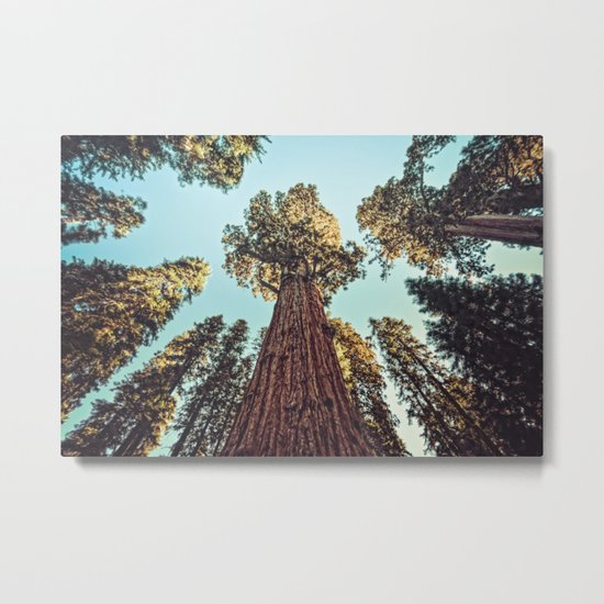 The Largest Tree in the World Metal Print