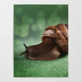 Garden snail on a green leaf Poster
