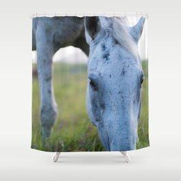 Bluey I Shower Curtain