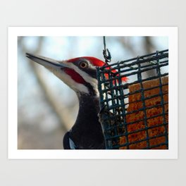 Pileated woodpecker at Grammy's house! Art Print