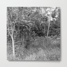 The Forest in Monochrome Metal Print