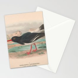 002 Pied Oyster catcher haematopus longirostris4 Stationery Cards