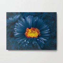 blue aster Metal Print
