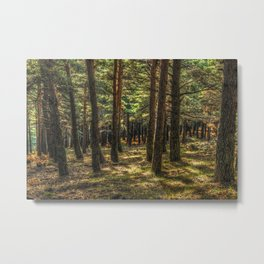 Forest #11 Metal Print