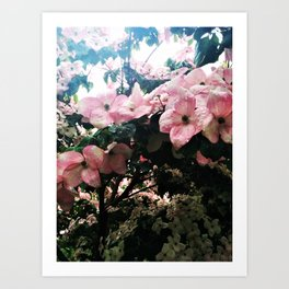 Dogwood Rainful Art Print