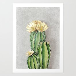 Cactus with yellow flowers Art Print