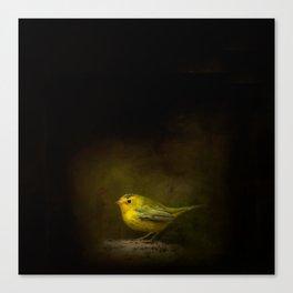 Wilson's Warbler Vignette Canvas Print