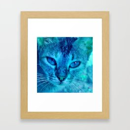 cats eyes: ischia Framed Art Print