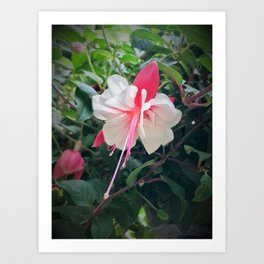 Pretty Flower in Butchart's Garden Art Print