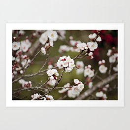 Drawn to the Scent of Spring Art Print