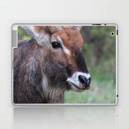 Portrait of a Male Waterbuck Laptop & iPad Skin