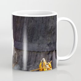 The Beautiful Maine Coon Dilute Calico Coffee Mug
