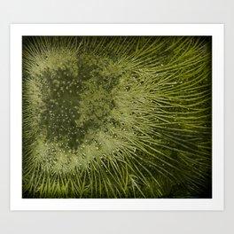 Chlorella Art Print