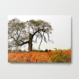 Vineyards and November tree Metal Print