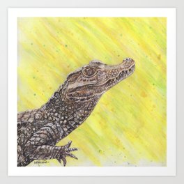 Dwarf Caiman - Small Alligator Art Print